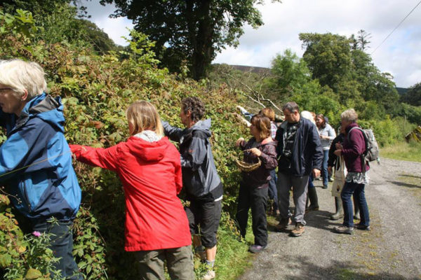 Blackstairs Eco Trails